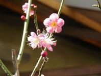 柚華ひな祭り 2 029