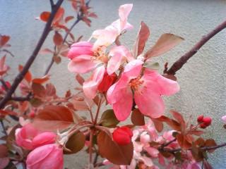 屋上も春 (3)