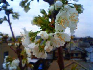 屋上も春 (2)