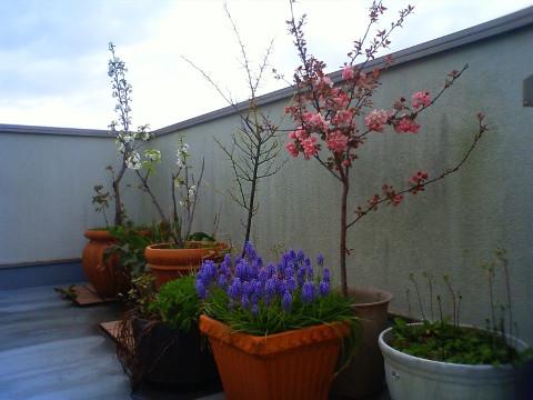 屋上も春 (1)